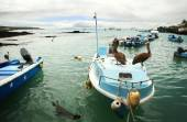 Panoramic view of fishermen dock with boats — Stock Photo