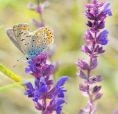 Butterfly on pink flower design — Stock Photo