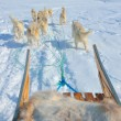 Dog sledging in greenland — Stock Photo #58867271