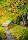 Maple corridor, Kawaguchiko lake, Japan — Stock Photo