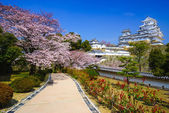 Himeji Castle in  cherry blossom season, Hyogo, Japan — Stock Photo