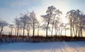Forest with deciduous trees in winter landscape — Foto Stock