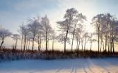 Floresta com árvores de folha caduca na paisagem de inverno — Fotografia Stock