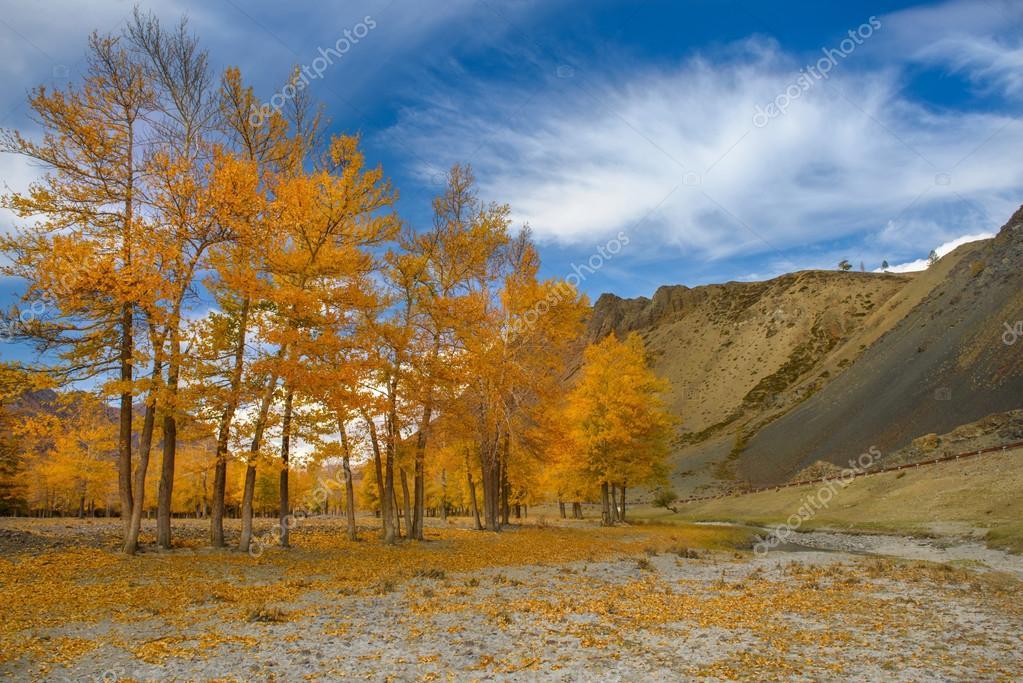 Золотая осень в степи картинки
