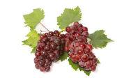 Röda druvor med blad — Stockfoto