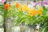 Orchid flower bloom  in plant market Thailand — Stock Photo
