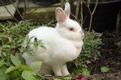 Vit kanin i trädgården — Stockfoto