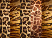 Texture of animal skins ,leopard,tiger and giraffe  — Stock Photo