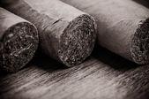 Cigars close-up — Stock Photo
