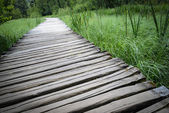 Wooden Boardwalk Hiking Trail — Stock Photo
