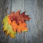 Autumn leaves — Stock Photo #59246257