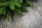 Tree branch for christmas decor — Stock Photo