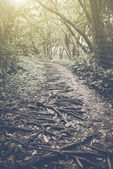 Retro Hiking Trail — Stock Photo