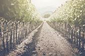Vintage Vineyard in Autumn — Stock Photo