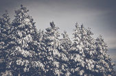 Trees covered in Snow — Stock Photo