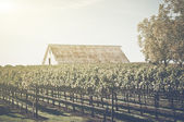 Vintage Barn in Vineyard — Stock Photo