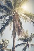 Vintage Palm Tree — Stock Photo