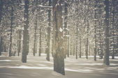 Vintage Trees covered in Snow — Stockfoto