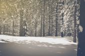 Vintage Trees covered in Snow — Stock Photo