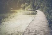 Hiking Trail in the Forest — Stock Photo