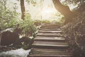 Retro Hiking Path with Sunlight — Stock Photo