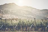 Vineyard with Blue Sky — Stock Photo