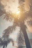 Palm Tree med Retro Filter — Stockfoto