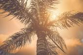 Palm Tree with  Retro Filter — Stock Photo