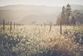 Vineyard in Spring with  Film Style Filter — Stock Photo