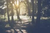 Blurred Nature Background — Stock Photo