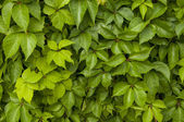 Abstract colorful  bright green leafs — Stock fotografie