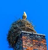 Stork nest on old factory chimney in famous village Ribbeck, near Berlin — Foto Stock