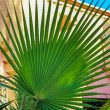 Beautiful palm tree in the sunshine — Stock Photo #55888365