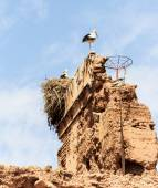 Storks nest on decayed loam house in medina of Marrakech — Stock Photo