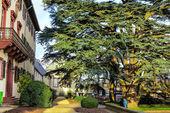 200 year old cedar (Cedrus libani) in the palace garden Bad Homburg, Germany — Stock Photo