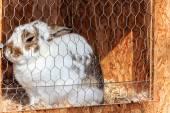 White rabbit in the hutch — Stock Photo