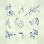 Set of garden and wild hand-drawn sketches berries — Stock Vector #68812053