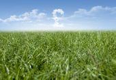 Gräset moln och pengar — Stockfoto