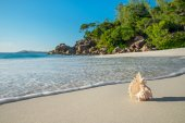 Seashell at tropical beach Anse Georgette at island Praslin, Sey — Stock Photo