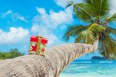 Gift box on coconut palm tree — Stock Photo