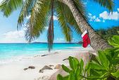 Christmas sock on palm tree — Stock Photo