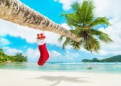 Christmas sock with gifts on palm tree — Stock Photo