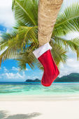 Christmas sock on palm tree — Stock Photo