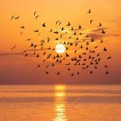 Beautiful sunset with birds flock — Stock Photo