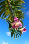 Orchidée avec gros plan feuille de palmier — Photo