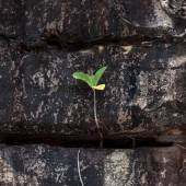 Sprout of troical tree groing in the rock — Stock Photo