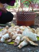 Funghi freschi — Foto Stock