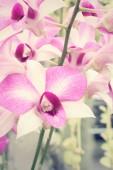 Fiore orchidea rosa — Foto Stock