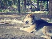 睡觉的狗狗 — 图库照片