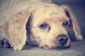 Собака — Стоковое фото